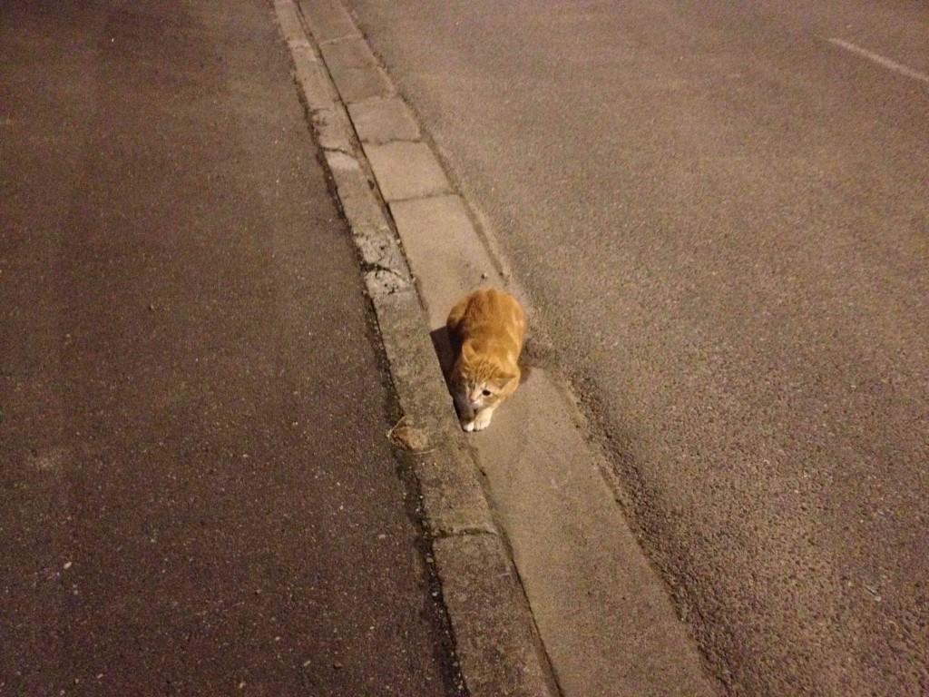 Jack le chat attend Igor dans le caniveau