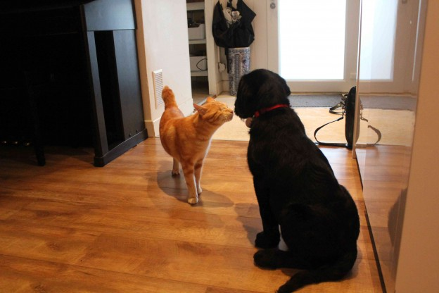 Chiot et chat sont maintenant copains