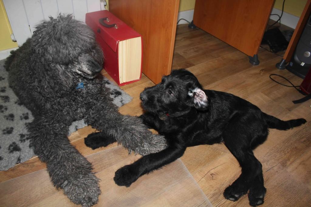 Igor et Luna jouent