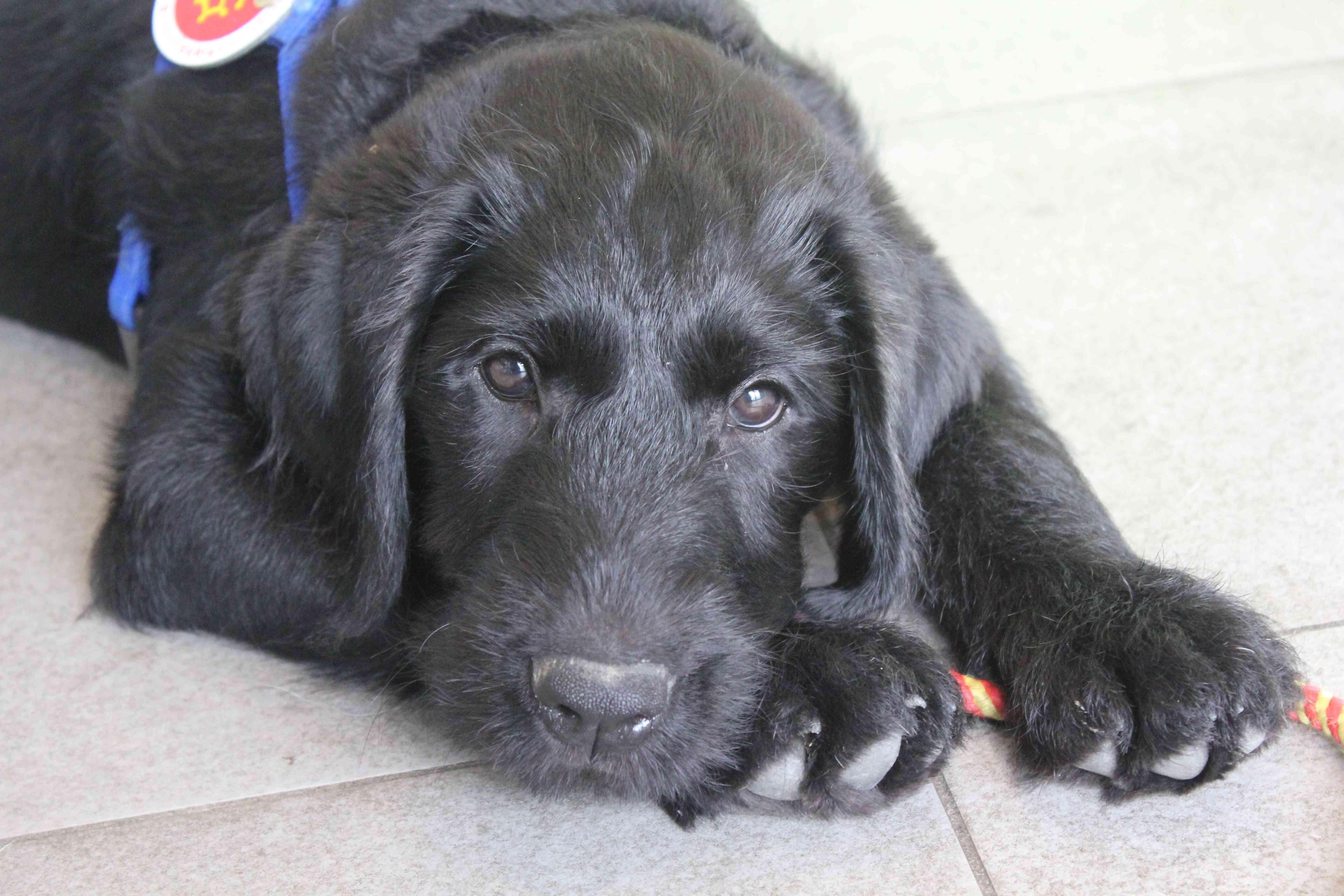 Première visite chez le vétérinaire