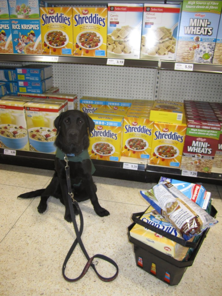 guide dog in grocery store