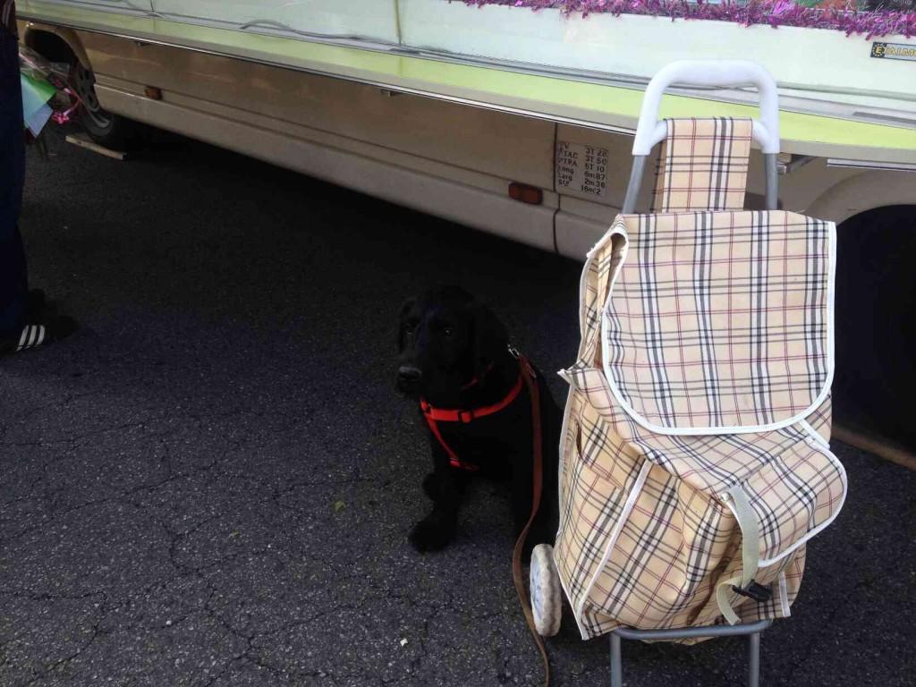 Igor assis à côté du chariot