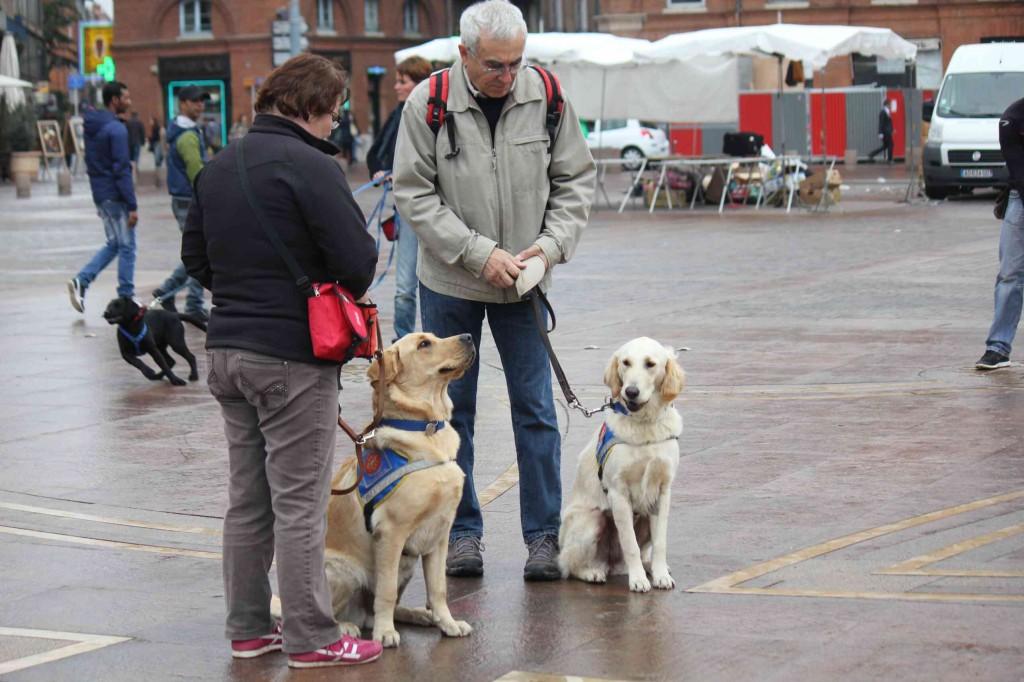 Deux futurs chiens-guides et leurs familles d'accueil