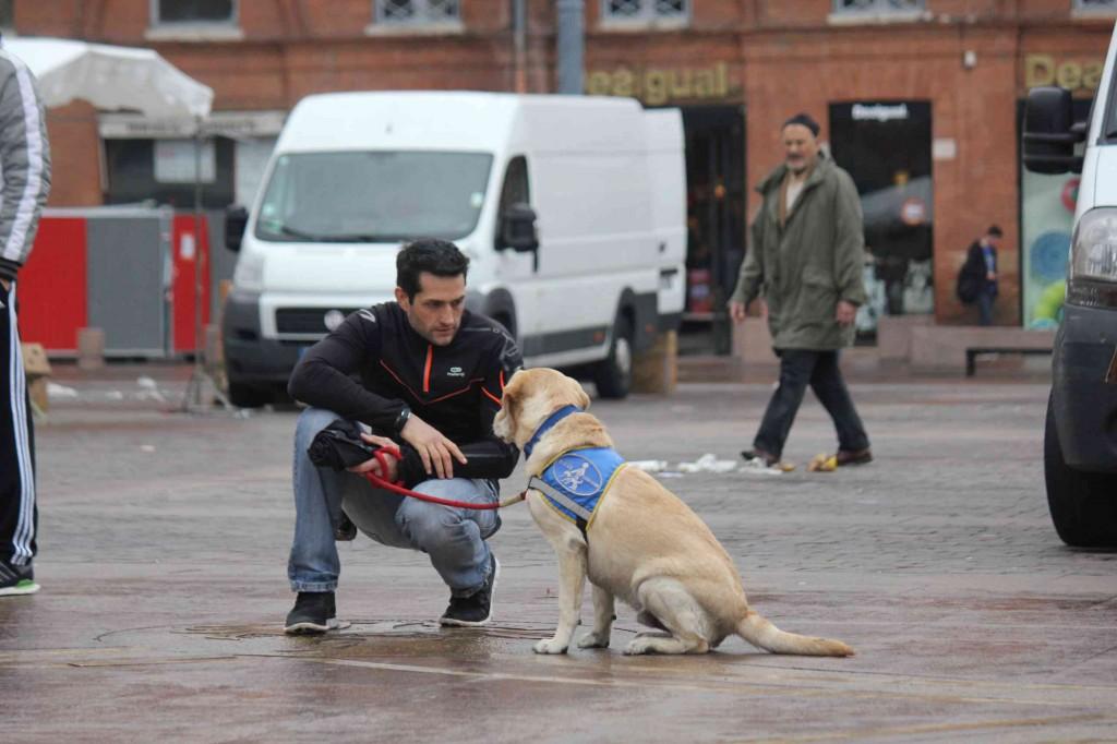 Un chien guide et sa famille d'accueil