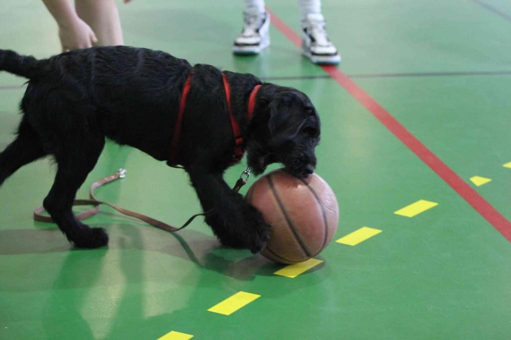 Igor essaie de mordre un balon de basket