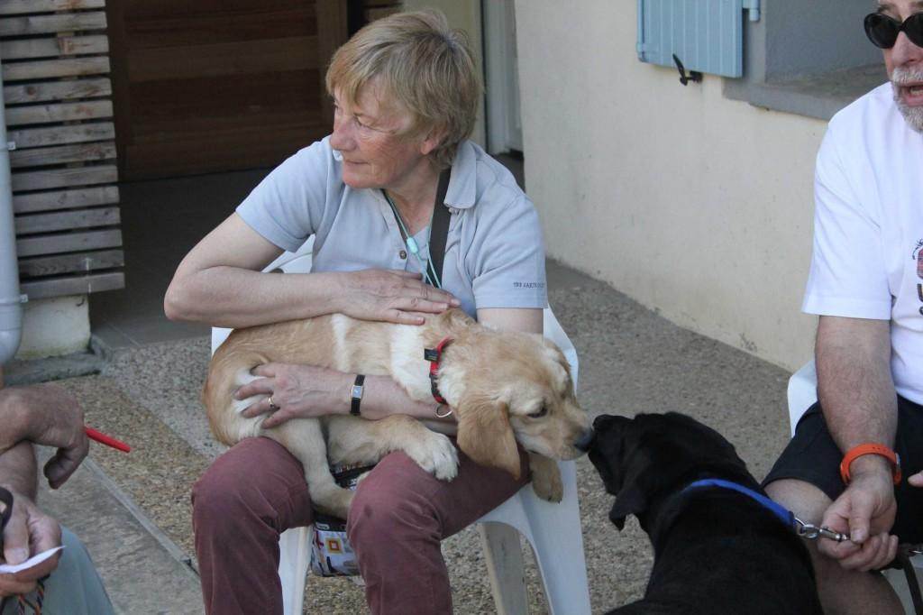 Les familles d'accueil discutent et les chiens font connaissance