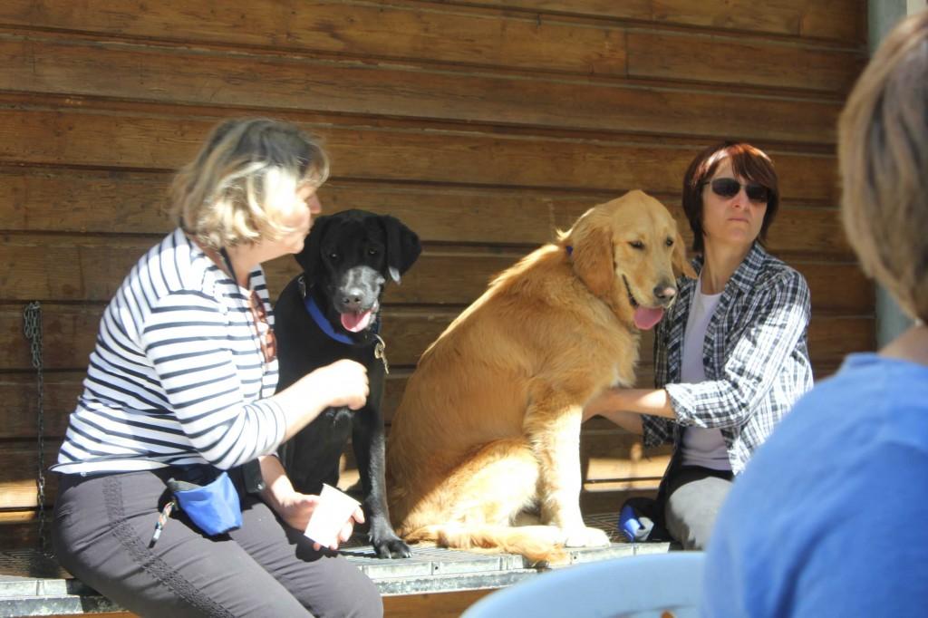 Des chiens plus grands sur le banc