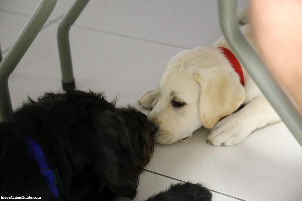 Igor et un nouveau chiot font connaissance sous la table