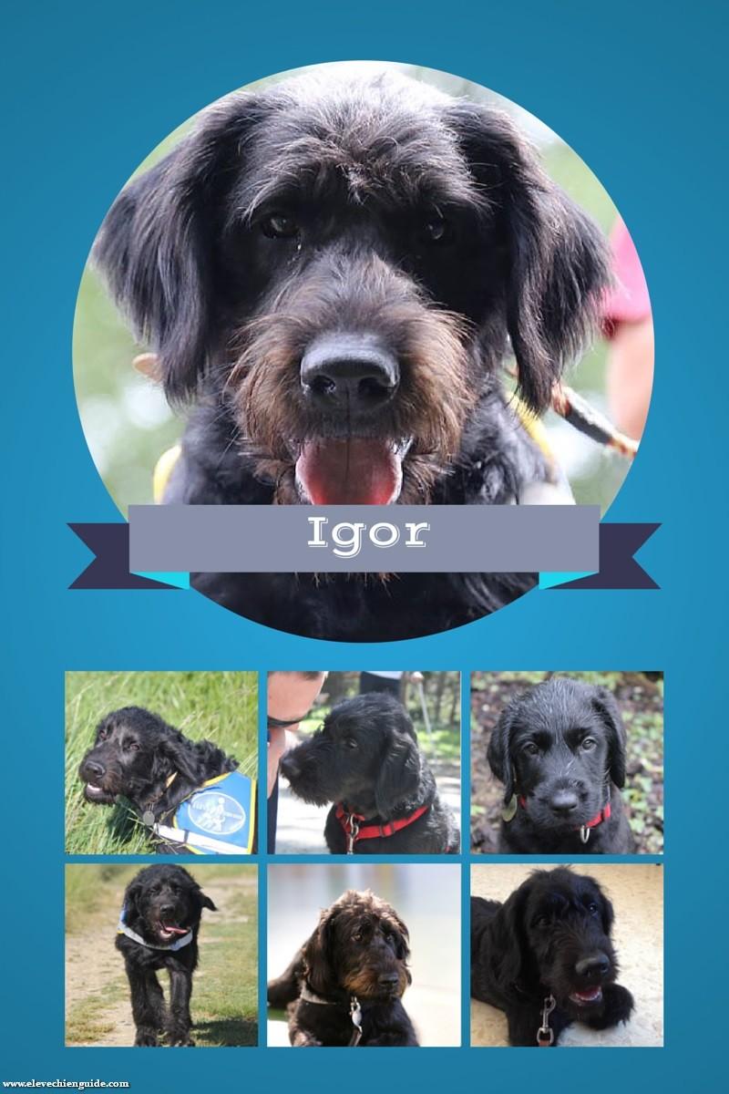 Woohoo ! Igor est bon pour le service !