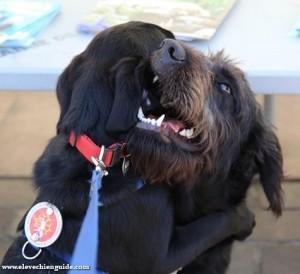 Igor aime jouer avec d'autres chiens