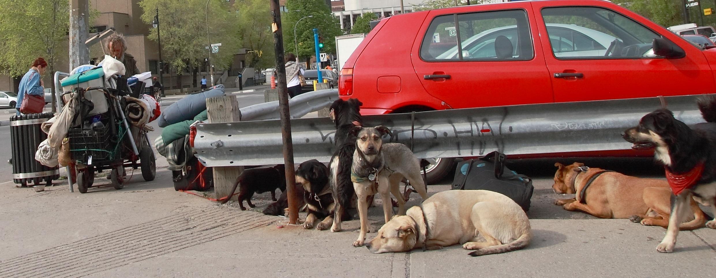 SDF et chiens