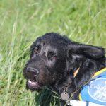 Conseils utiles à l'éducation canine