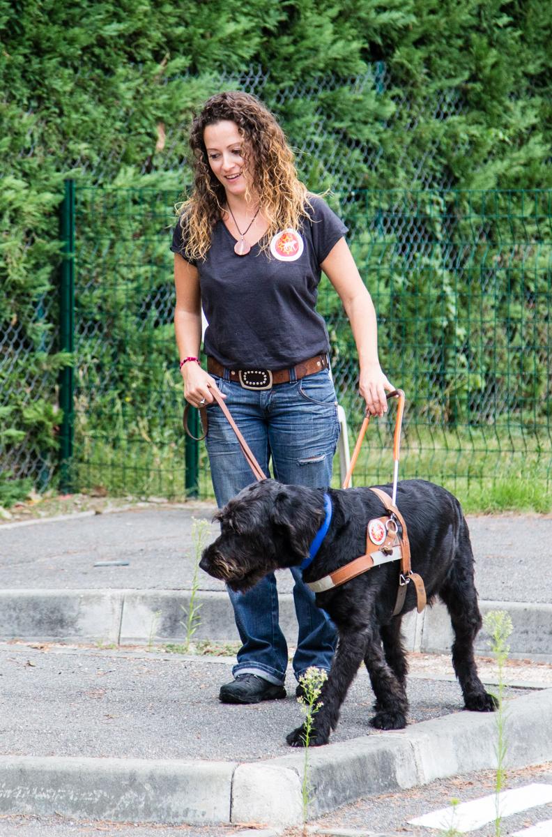 Le harnais du chien guide