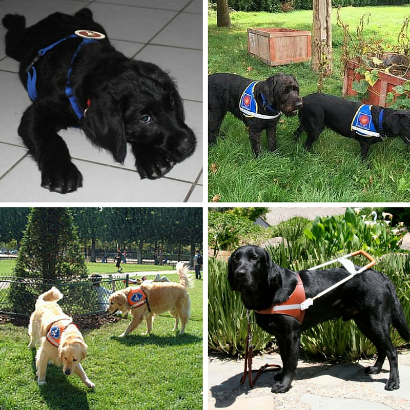 Les 4 types d'identification chien guide