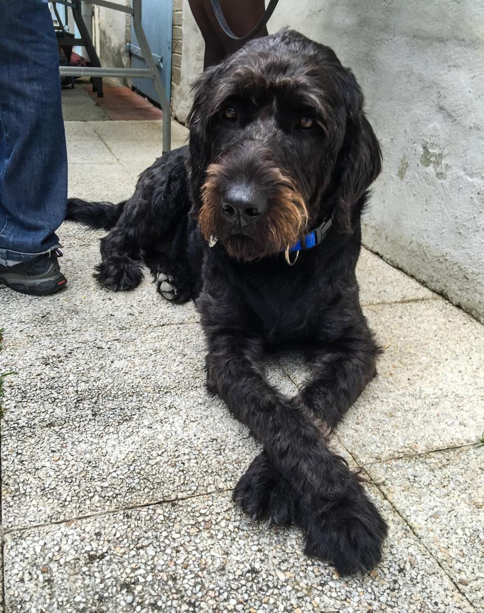 C'est officiel, Igor est chien guide d'aveugle !