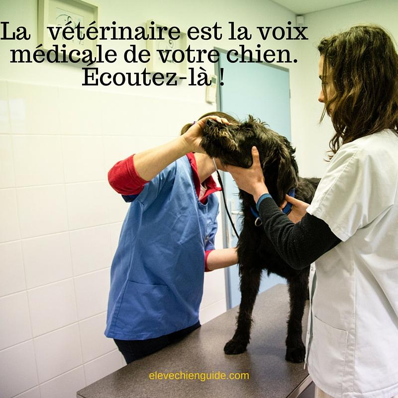 Votre vétérinaire est la voix médicale de votre animal