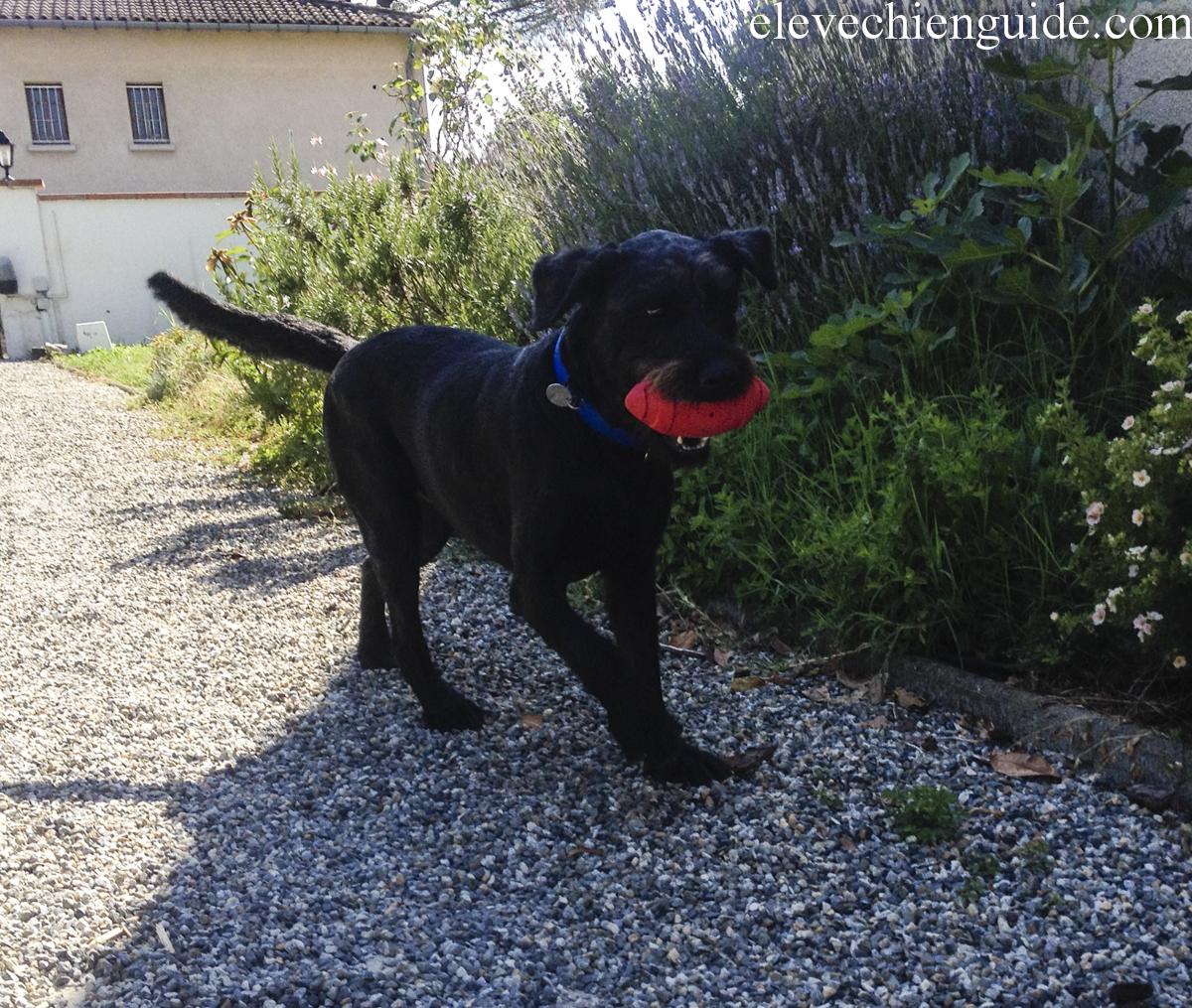Détente : les chiens jouent avec un Nerf Ball