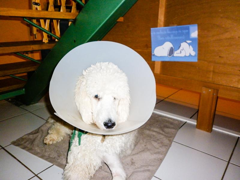 Helfy après une opération