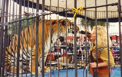 Dressage de lion photo Roger W