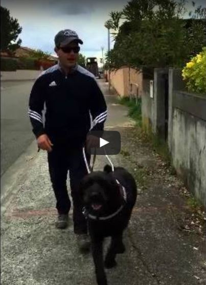 Vidéo d'Igor et Nicolas en promenade