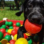 Massaï au Canipôle pour la session d'obéissance canine