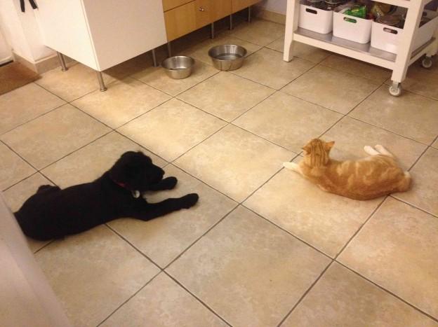 Igor et le chat à 1m dans la cuisine