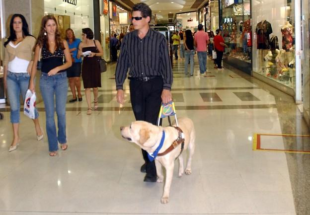 Un non-voyant et son chien-guide