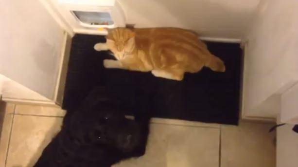 Jack le chat aime vivre dangereusement