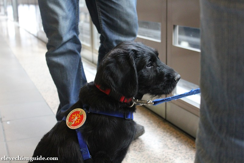 L'année d'Igor l'élève chien guide en photos