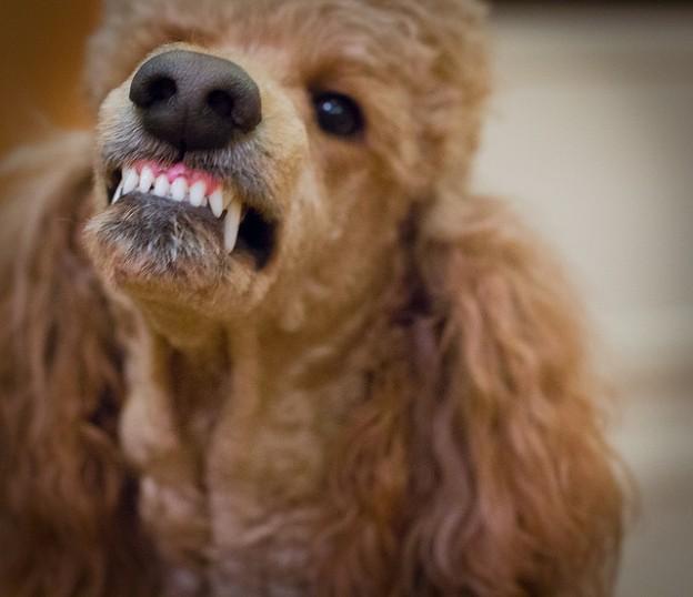 Si vous ne contrôlez pas votre chien ça va mal se passer