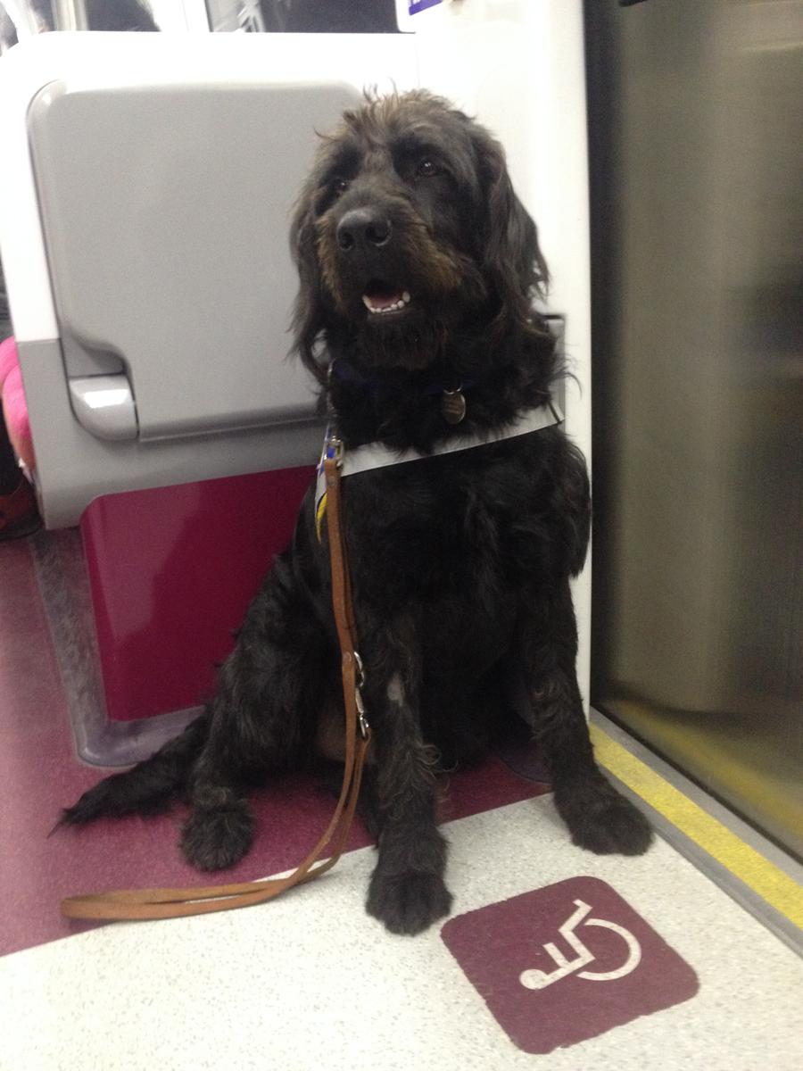 Chien guide Igor dans le métro